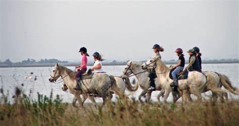 Quels sont les meilleurs accessoires equitation