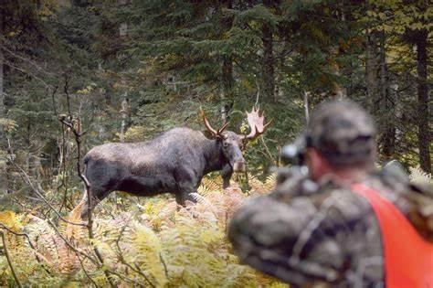 Quels sont les meilleurs accessoires chasse