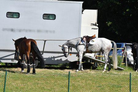 Choisir un van 2 places pour assurer le transport de ses chevaux