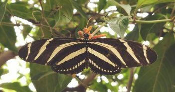 Top 10 des meilleurs papillon de jardin
